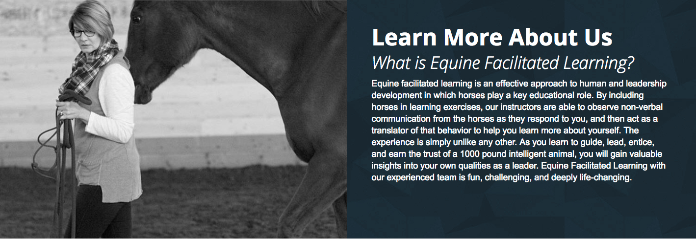 Equine facilitated learning is an effective approach to human and leadership development in which horses play a key educational role. By including horses in learning exercises, our instructors are able to observe non-verbal communication from the horses as they respond to you, and then act as a translator of that behavior to help you learn more about yourself. The experience is simply unlike any other. As you learn to guide, lead, entice, and earn the trust of a 1000 pound intelligent animal, you will gain valuable insights into your own qualities as a leader. Equine Facilitated Learning with our experienced team is fun, challenging, and deeply life-changing.
